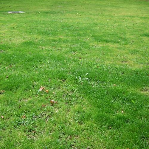 grass_006.jpg