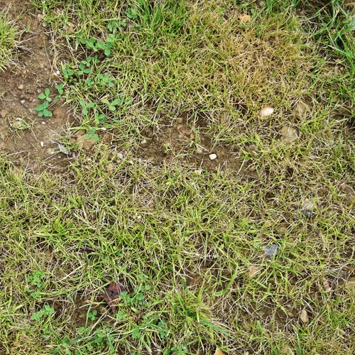 grass_002.jpg