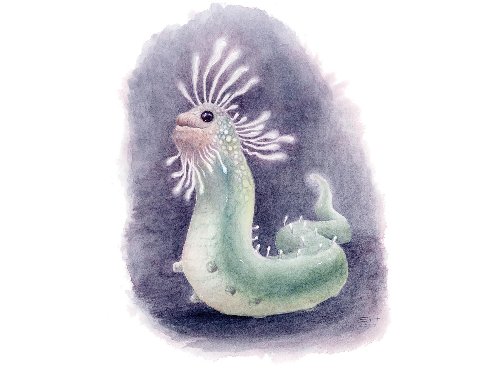 slug-like animal