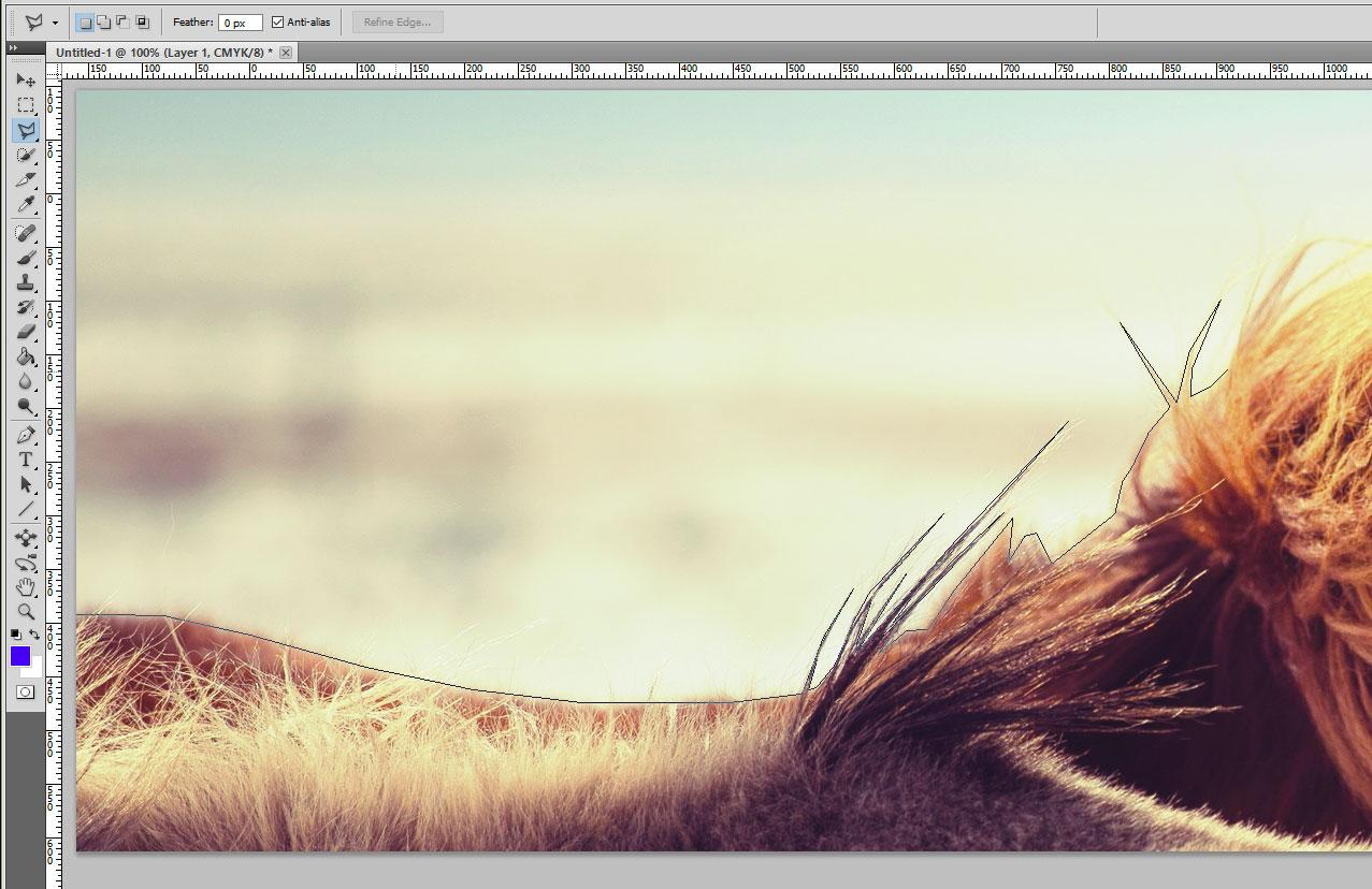 close up of horse in Photoshop with regular Lasso