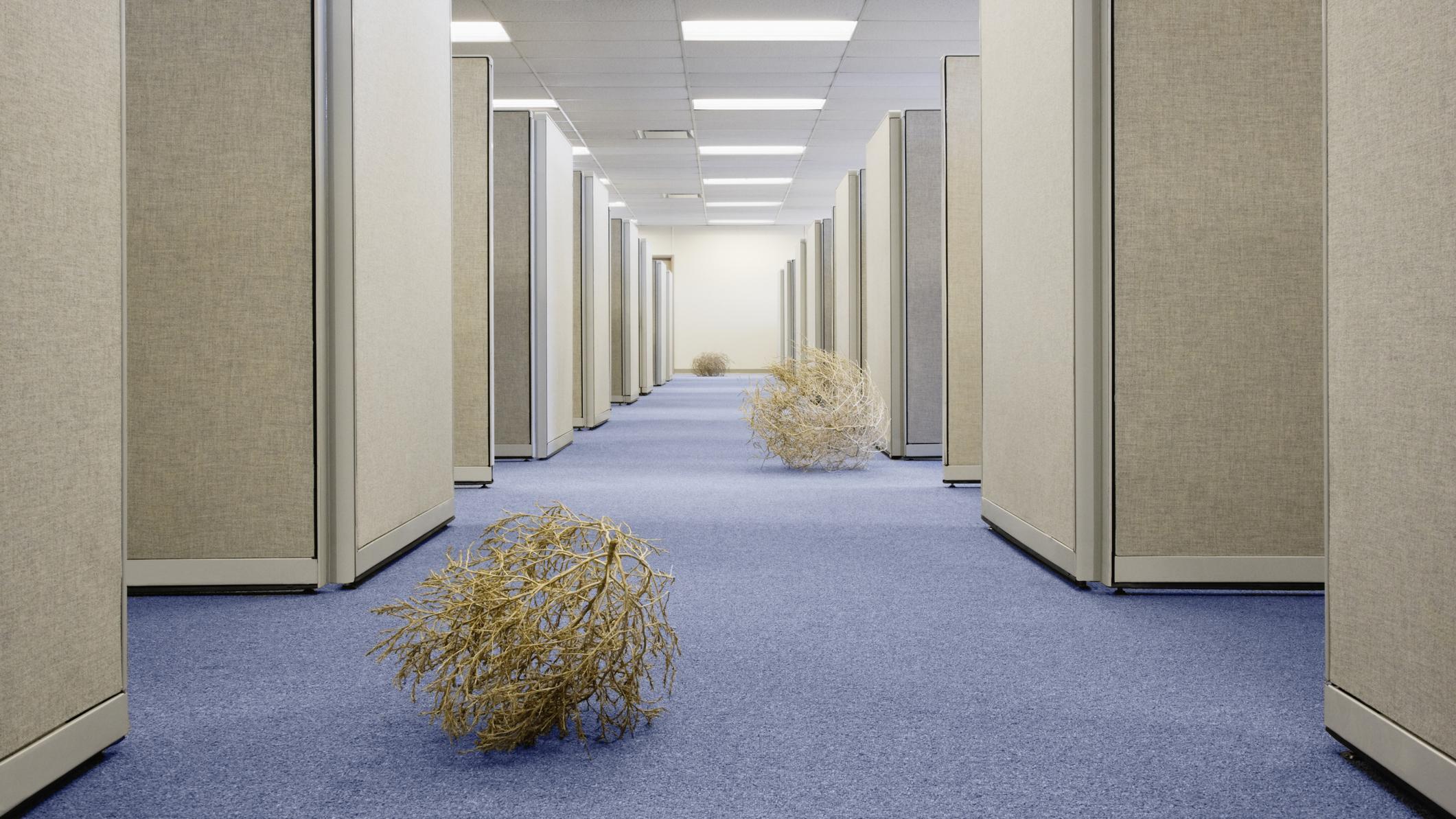 Tumbleweed in the hallway