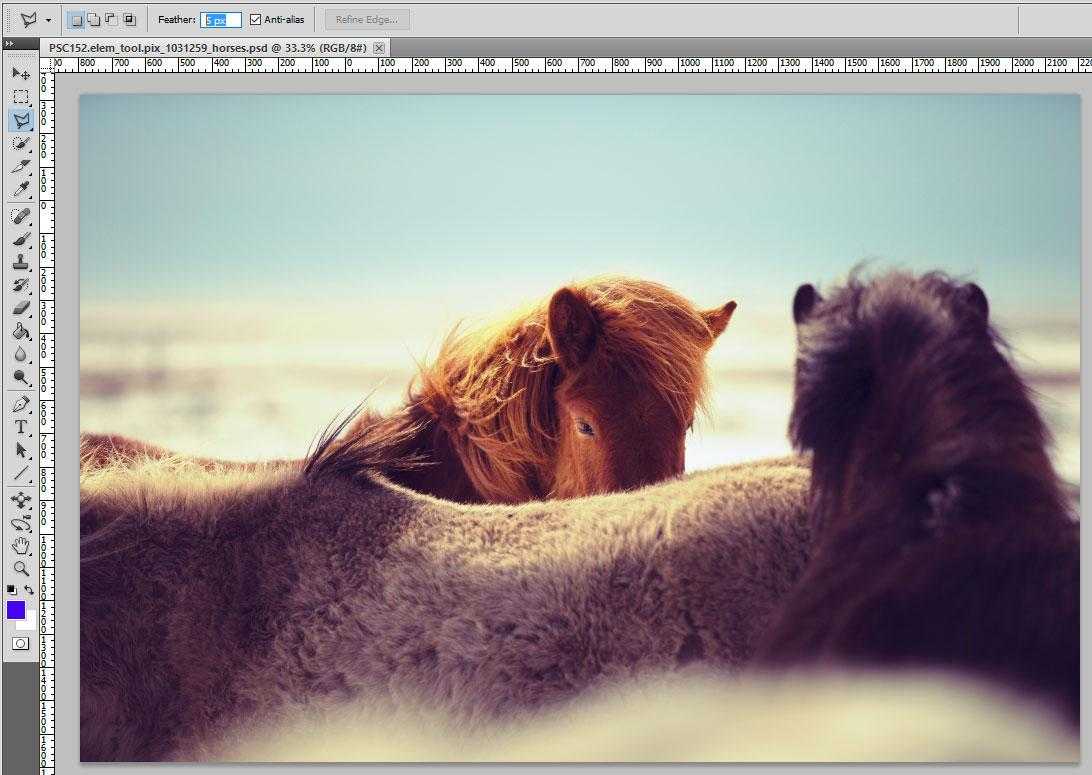 horses in Photoshop