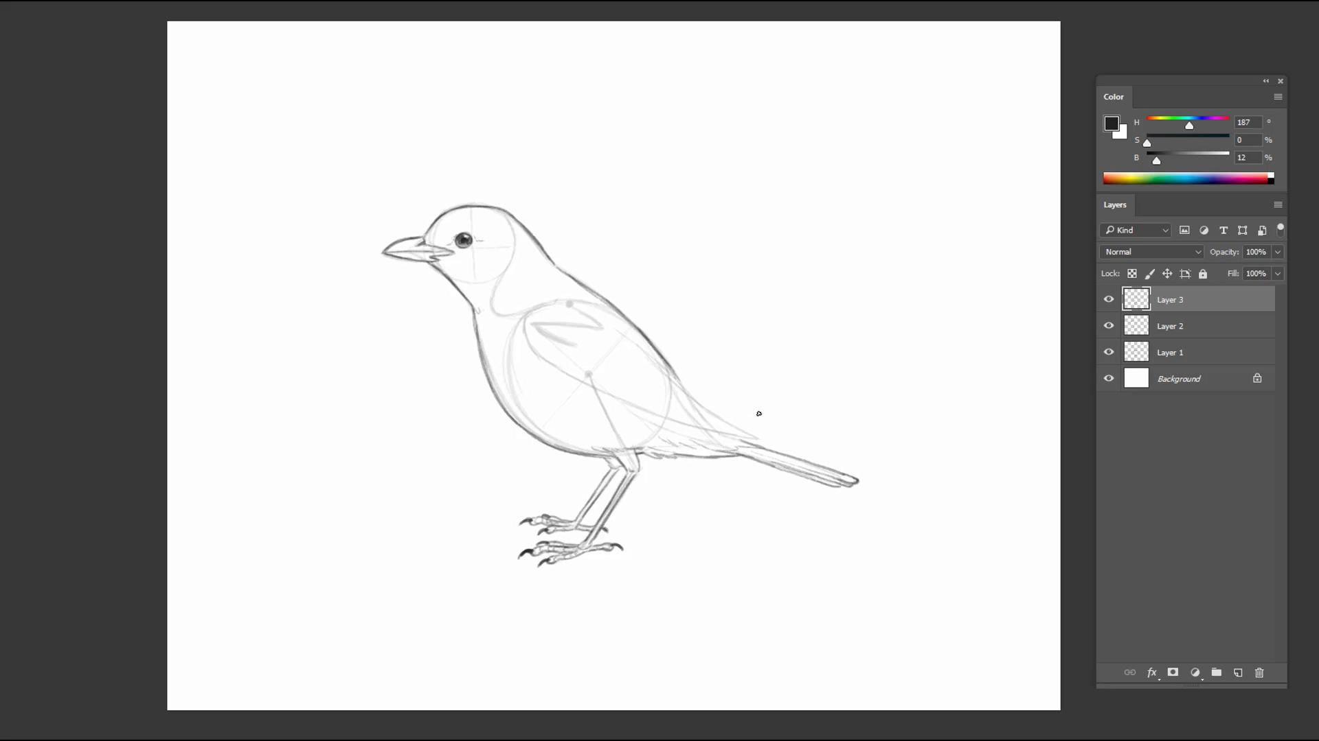 Pencil sketch of a bird