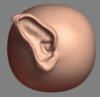 ZBrush tutorials: Modelling ears