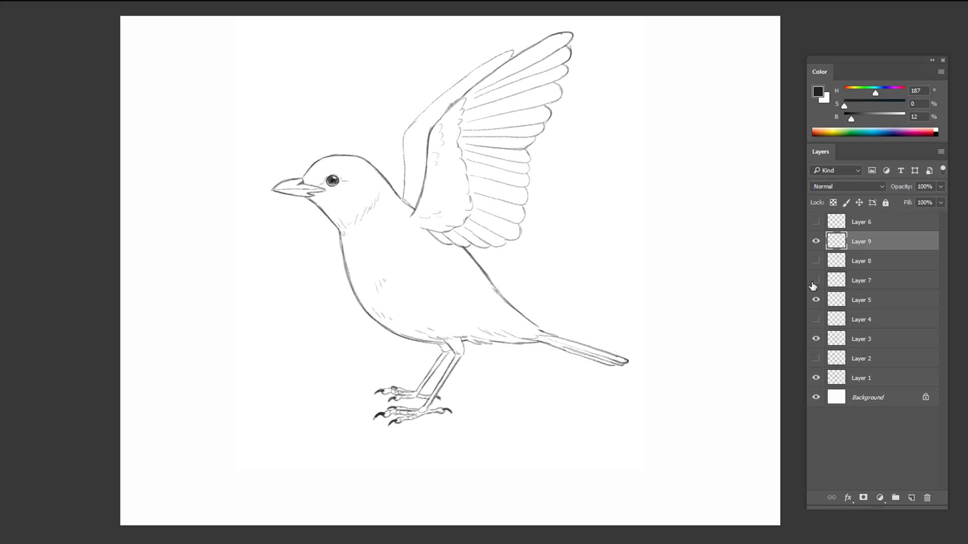 Pencil sketch of a bird about to take flight