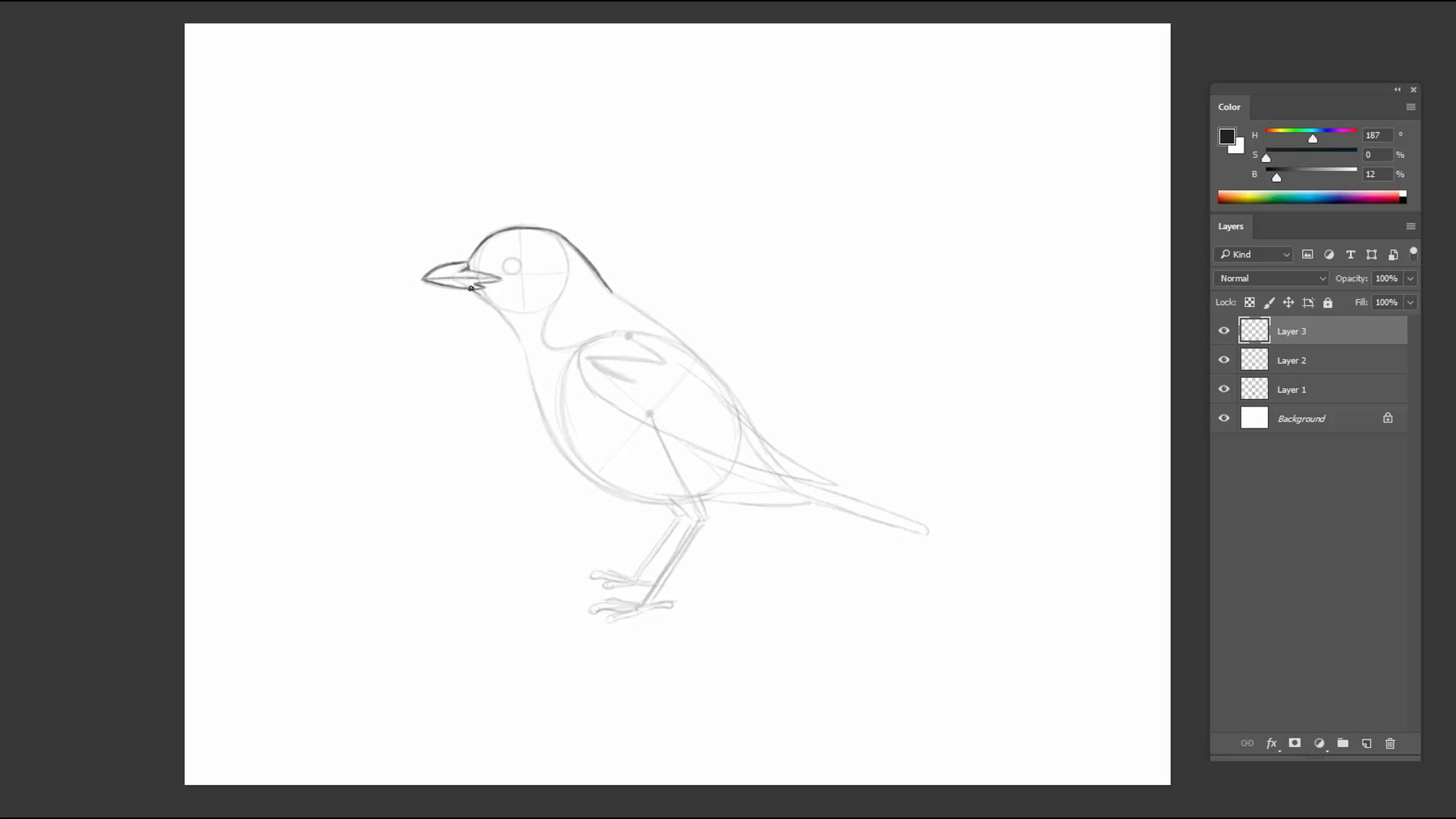 Rough pencil sketch of a bird