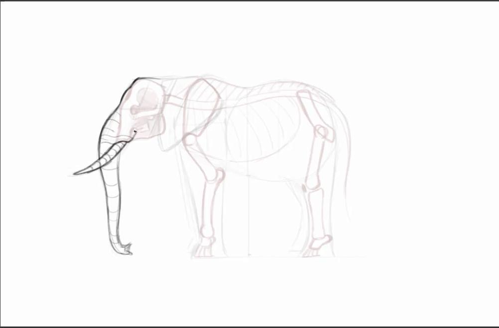 Rough sketch of an elephant