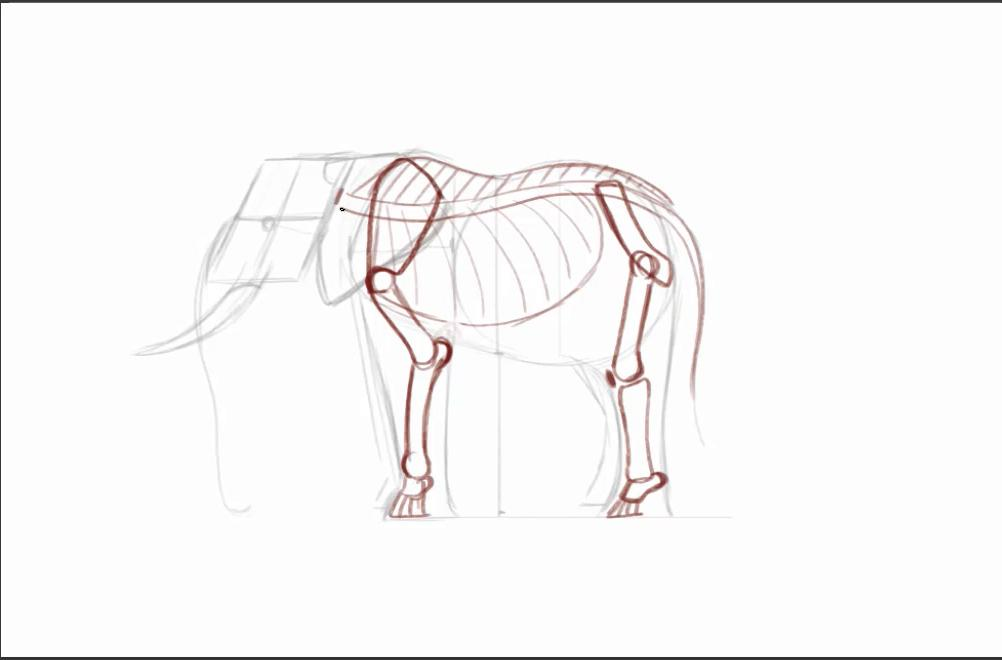 Sketch of elephant skeleton