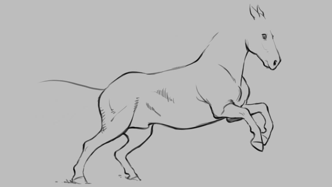 A basic drawing of a horse's body with different line weights