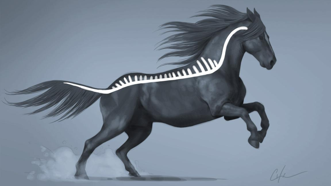 Drawing of a galloping horse with a sketch of it spine overlaid