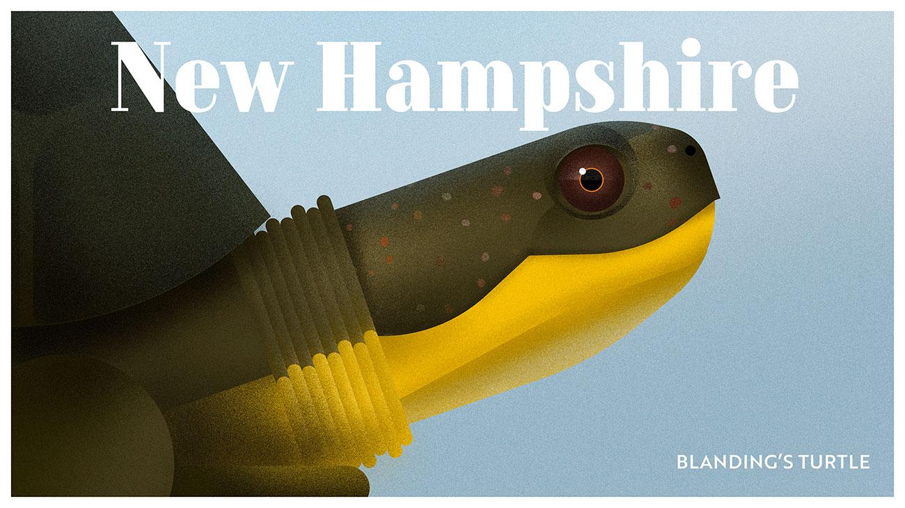 Endangered wildlife posters: Blanding's turtle