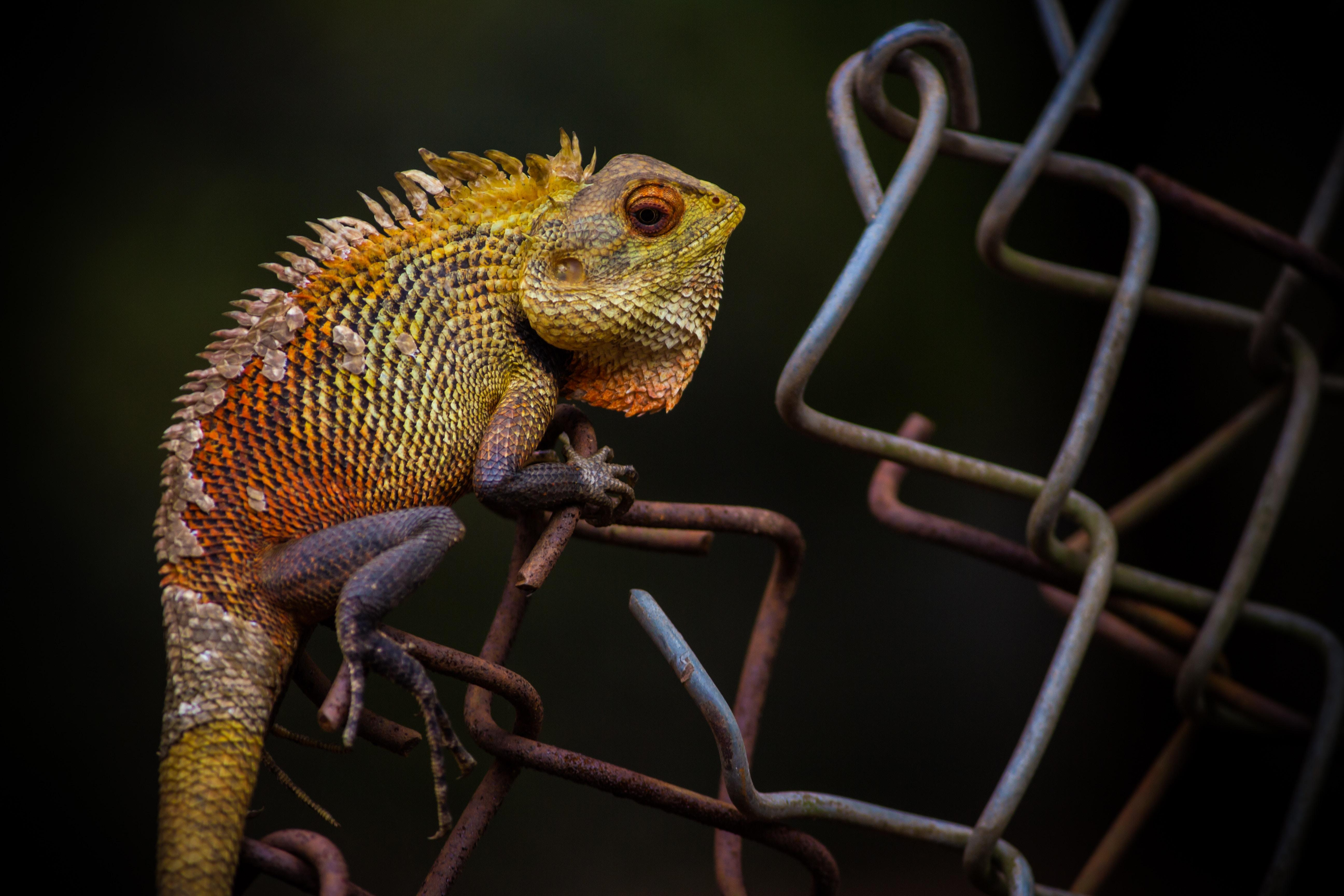 Student stereotypes: Lizard on wire